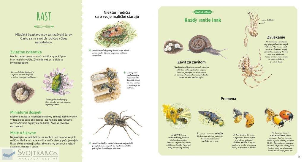 Hmyz a iné bezstavovce