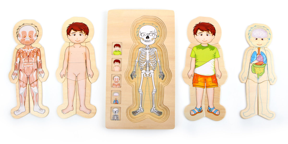 Drevená skladačka anatómia tela chlapec